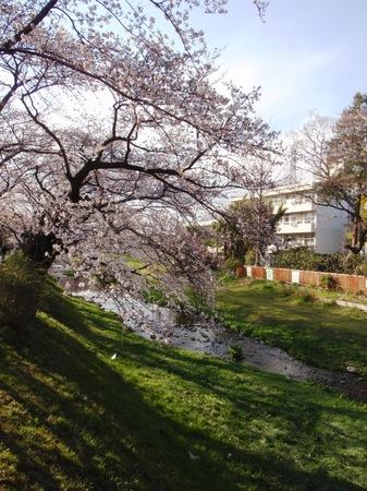 2012sakura 011.JPG